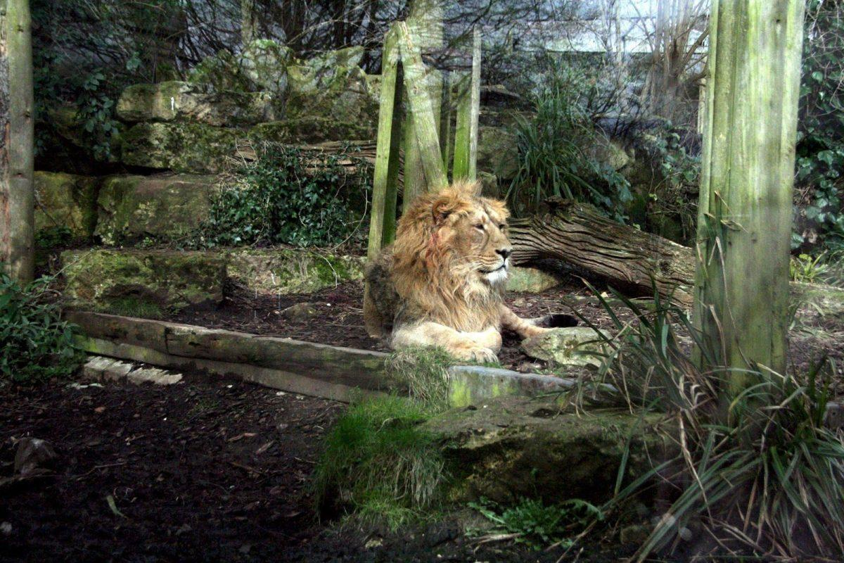 How to spend a Fun-Packed day in Bristol - Bristol Zoo