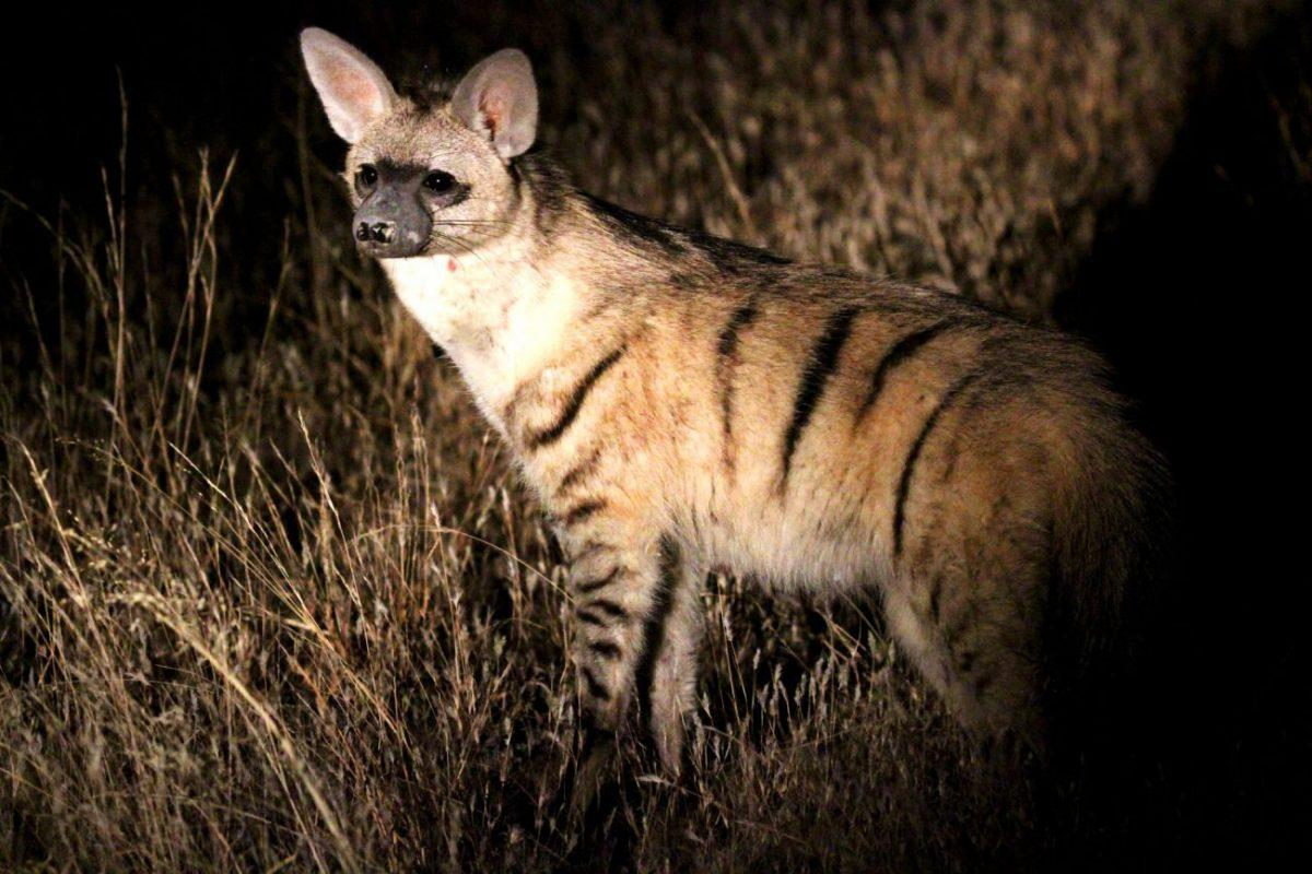 Top 10 Rare African Animals & Where to Find Them – A Life Beautifully  Travelled