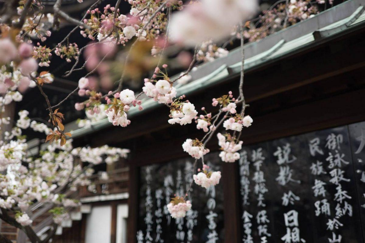 Everything you need to know to plan your trip to Japan - japan in a nutshell