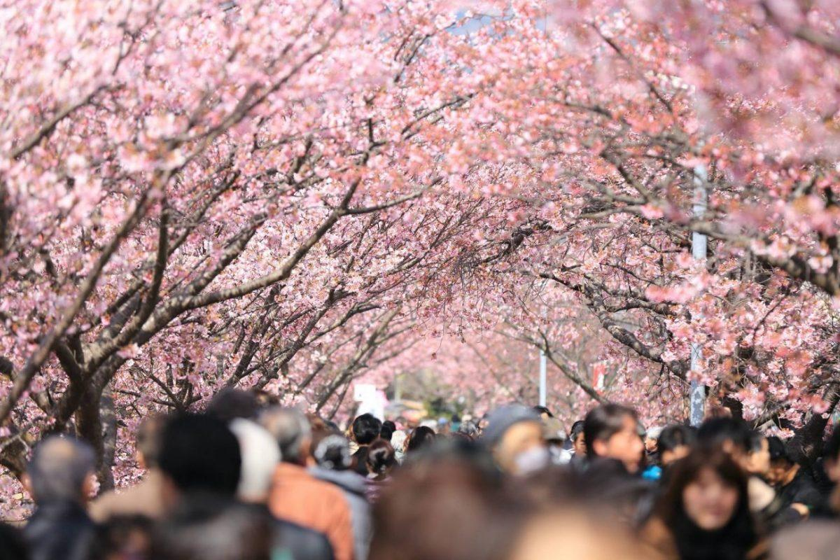 Everything you need to know to plan your trip to Japan - when to travel what season