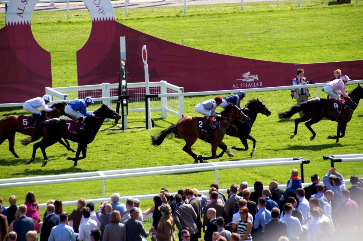 a day out at al shaquab lockinge day newbury racecourses - activities 7