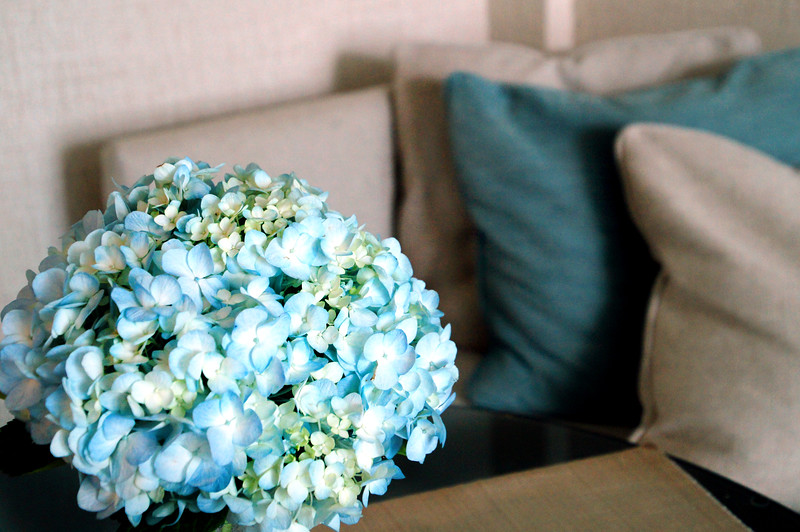blue hyacinth in the living area in the bedroom in the oriental residence in bangkok thailand
